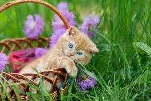 Cute Kitten Cat Pictures with Flowers