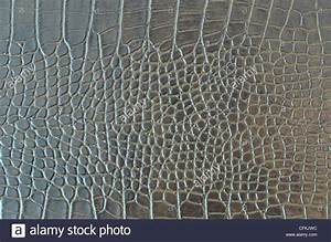 Crocodile Skin Pattern , Alligator skin seamless texture ...