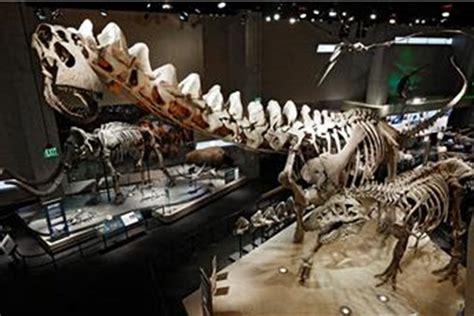 Lubanja najmanjeg dinosaura očuvana u jantaru - Glas Istre