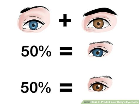 baby eye color predictor how to predict your baby s eye color 12 steps with pictures