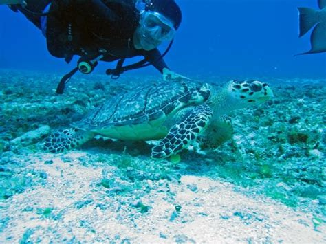 cancun scuba center
