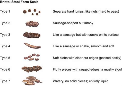 bristol stool form scale  stool images