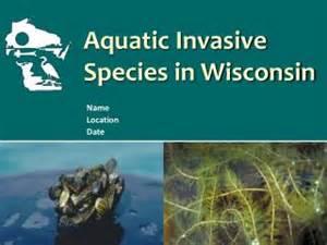 PPT - Aquatic Invasive Species in Wisconsin PowerPoint ...