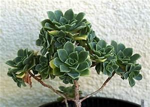 Sukkulenten Arten Bilder : sukkulenten und kaktus arten hausgartennet holidays oo ~ Lizthompson.info Haus und Dekorationen