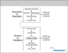 Lactic Acidosis Related Keywords & Suggestions - Lactic Acidosis Long ...  Constipation Acidosis