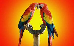 55 Cute Love Bird Colorful Parrot HD Wallpapers Download