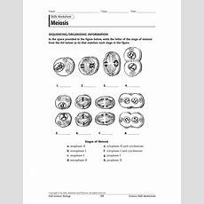 Meiosis Stages Worksheet Için Resim Sonucu  Biyoloji  Worksheets, Biology, Stage