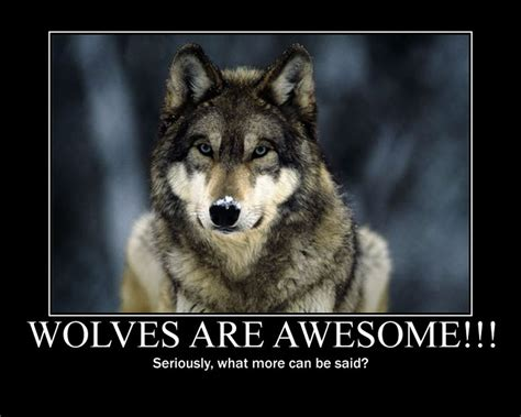 Black Wolf Quotes Wallpaper by Wolf Spirit Quotes Quotesgram