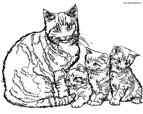 malvorlagen fur kinder ausmalbilder katze kostenlos page