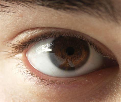 brown eye colors eye shadow for brown lipstickparlor