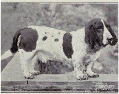 Dog Breeding Animals Ruined Century Hound Extreme