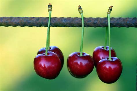 image libre cerise fruit nourriture macro fil