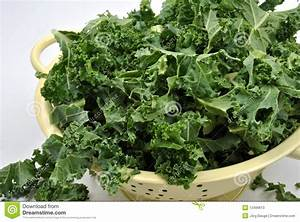 Organic Tender Leaf Curly Kale Stock Photos - Image: 12499613