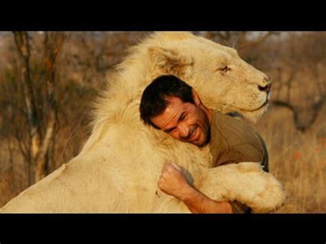 unbelievable friendship wild animals showing love