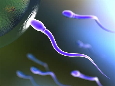 Cara Aman Berhubungan Hamil Muda Efek Negatif Sperma Untuk Ibu Hamil