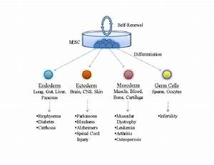 The Differentiation Potential Of Human Embryonic Stem