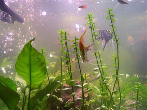 entretien d un aquarium