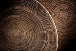 What Tree Rings Tell Us About The Climate