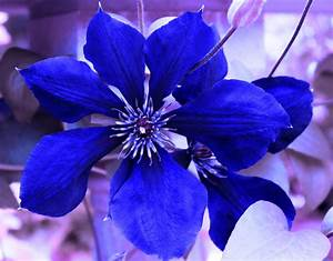 Indigo Flower Photograph by Milena Ilieva