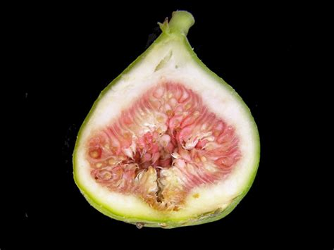 fig season fig season is here