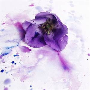 31 best images about Flower photographs on Pinterest ...