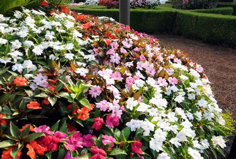 best plants for sun and shade annuals for part to full shade beyond impatiens and petunias u of i extension
