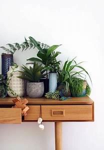 Grande Plante D Intérieur Facile D Entretien : zoom sur les plantes d int rieur faciles d entretien et ~ Premium-room.com Idées de Décoration