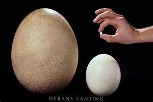Oeuf D Autruche : have fun with eggs strange stuff and funky things ~ Melissatoandfro.com Idées de Décoration