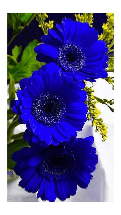 Gifs Flowers Flower Animated Wallpapers Foto Exotic