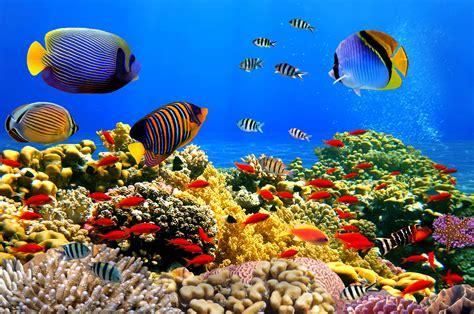 Underwater Wallpaper Download Free Pixelstalknet