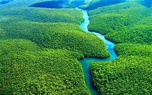 Amazon Rainforest Wallpaper for desktop and mobile in high ...