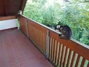 Katzen Balkon Sichern Ohne Netz : katzen auf dem balkon youtube ~ Frokenaadalensverden.com Haus und Dekorationen