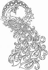 Coloring Paisley Peacock Mandala Printable Adult Sheets Becca Animal sketch template