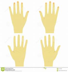 Hands, Front And Back Right And Left Stock Vector ...