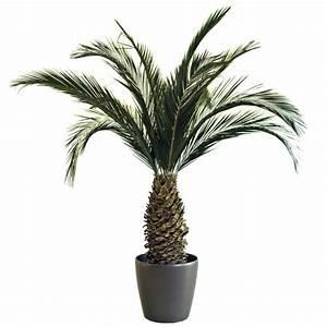 Plante D Intérieur Pas Cher : palmier ph nix ananas stabilis 200cm mat riel mur ~ Dailycaller-alerts.com Idées de Décoration