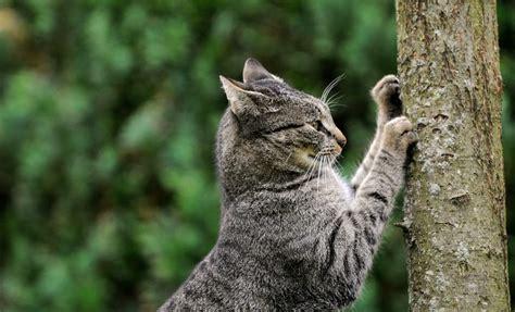 Katze Kratzt Tapete