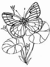 Coloring Butterflies Vlinders Fun Schmetterlinge Kleurplaat Malvorlage Stemmen Stimmen Erstellen Kalender sketch template