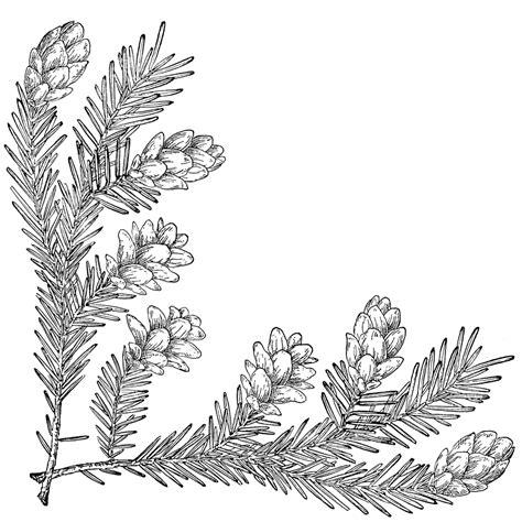pine cone corner  left clipart