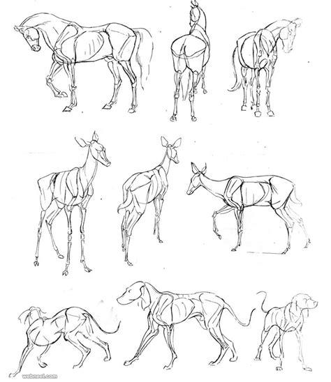 draw animals dog
