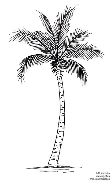 Palma Dibujo Dibujos