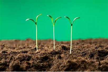 Shutterstock Contently Brands