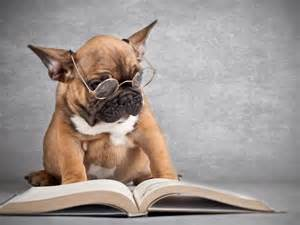 Image result for images of animals reading books