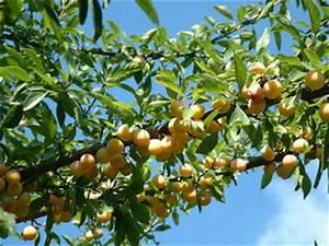 Protection Arbres Fruitiers : filet oiseaux tout ~ Premium-room.com Idées de Décoration
