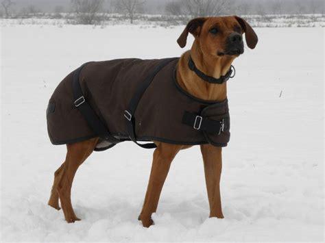 regenmantel für hunde mit bauchschutz hundemantel selbst verbessern weimaraner diy