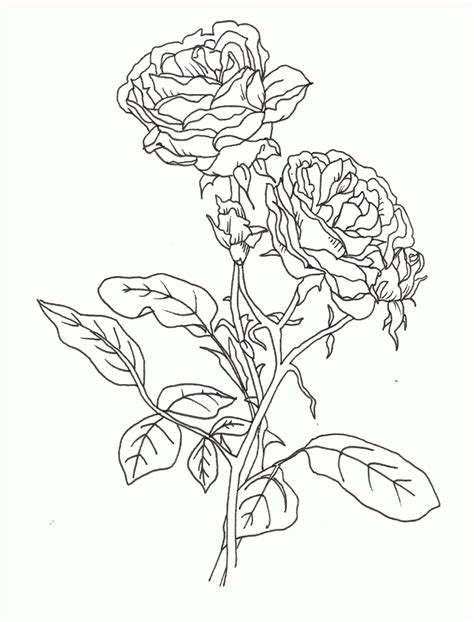 pretty flower coloring pages coloring home