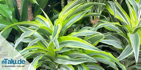 5 Pflegeleichte Pflanzen Für