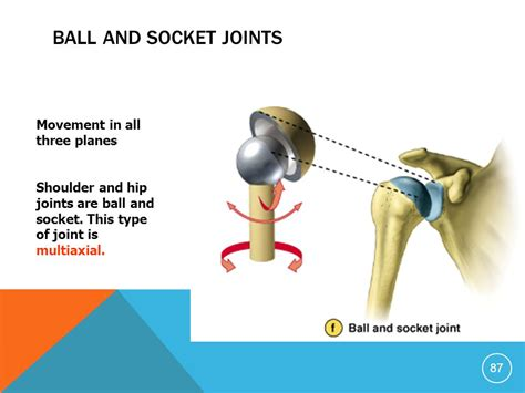 Is A Ball And Socket Joint A Uniaxial Joint Because Motion