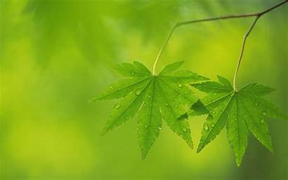 Background Leaf Leaves Wallpapers Trees