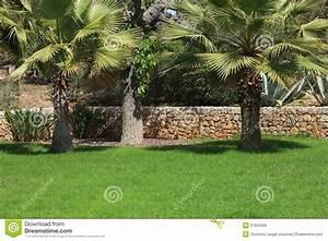 Palmier De Jardin : jardin tropical avec des palmiers images libres de droits ~ Nature-et-papiers.com Idées de Décoration