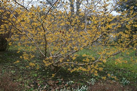 Botanischer Garten München Größte Blume Der Welt by Bayern Fr 252 Hlingsanfang In M 252 Nchen